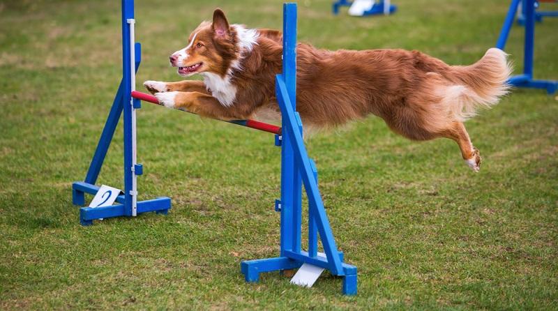 Ein Hund braucht Aufmerksamkeit und auch Aufgaben. Für ihn bedeuten die Kommandos keine reine Pflicht, sondern sie machen ihm Freude. Genau deshalb sollte man seinen Vierbeiner nicht zu lange alleine lassen, sondern sich mit ihm beschäftigen. (#03)