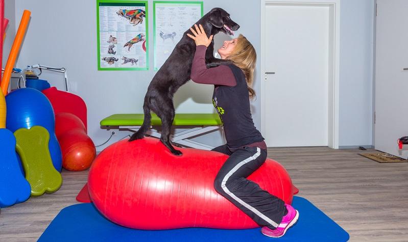 In Deutschland sind Haustiere extrem beliebt, vor allem Hunde sieht man immer häufiger. Das wirkt sich auch auf die wirtschaftlichen Statistiken aus, wie einige erfolgreiche Start-ups beweisen. (#01)