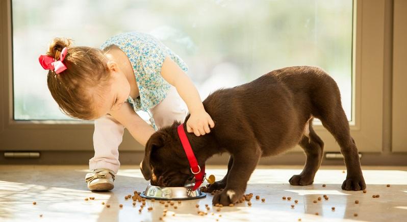 In früheren Zeiten fraßen die Hunde einige Essensreste, die gegebenenfalls mit etwas Trockenfutter ergänzt wurden, und tranken mehrmals täglich aus ihrem Wassernapf. Inzwischen bekommen jedoch die meisten Hunde ihr eigenes Standardfutter aus industrieller Produktion. (#02)