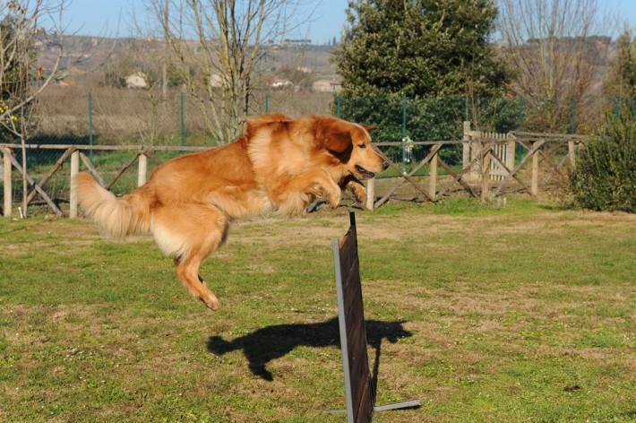 Hovawart mögen Sport und Spaß. Für Hunde gibt es eigene Trainingsplätze für Hundesport. Außerdem trifft man sich gerne auf Hundplätzen mit anderen Besitzern und deren Hunden. (#2)