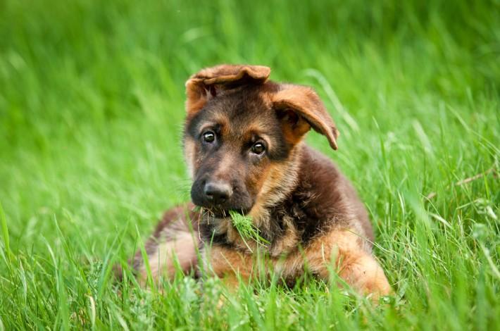 Von ihrem Züchter bekommen Rassehunde-Welpen einen Hundenamen, der sich später auf der Ahnentafel des Hundes wiederfindet. Viele Hundebesitzer geben ihrem Welpen zudem einen Rufnamen. Dieser sollte kurz und prägnant und klar auszusprechen sein. (#6)