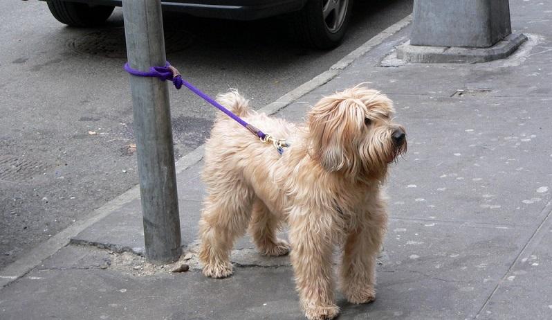 Um seinen Hund davor zu schützen, auf die Straße zu laufen oder den Bürgersteig zu versperren, binden die meisten Hundebesitzer ihn an einer entsprechend kurzen Leine fest. (#01)