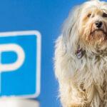 Hundeparkplätze: Die richtige Lösung?