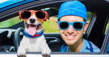 Mit dem Hund unterwegs: Die besten Transportmöglichkeiten