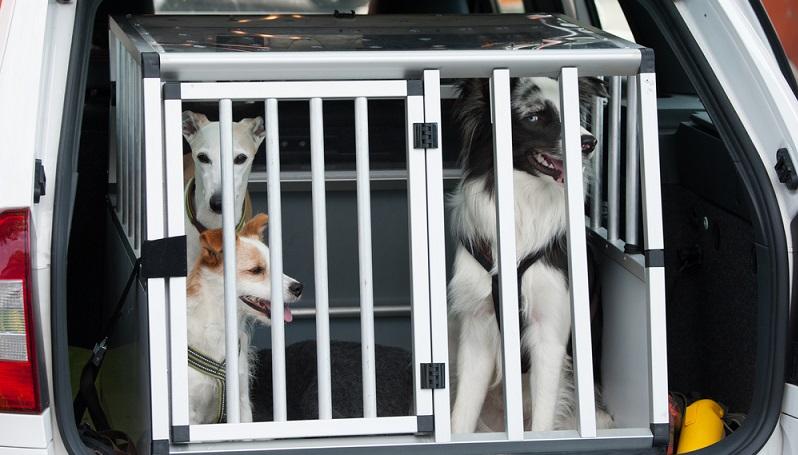 Der Hund ist immer mit dabei und darf natürlich auch auf Reisen nicht fehlen. Daher muss sich nahezu jeder Hundehalter mit der Frage beschäftigen, wie das Tier bestens transportiert werden kann. (#01)