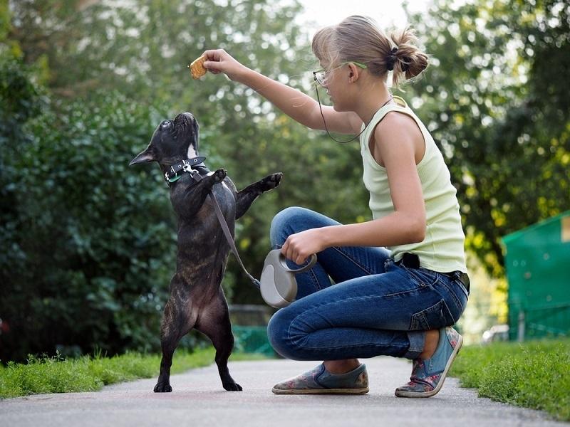 Junge Hunde haben noch viele Flausen im Kopf und müssen daher meist mit relativ viel Zeitaufwand erzogen werden.(#05)