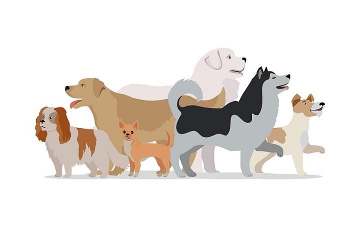 Soll es ein Wachhund oder ein Familienhund sein?(#02)