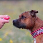 Einmaleins des Clickertrainings für Hunde