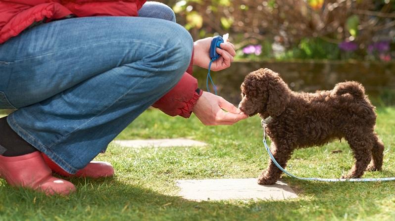 Das Clickertraining erfreut sich bei Tierhaltern einer wachsenden Beliebtheit. Dieses sogenannte Markertraining hilft dabei, den Hund zu erziehen und ihn zu beschäftigen. (#01)
