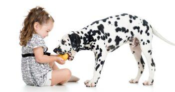 Vorsicht giftig! Diese 10 Lebensmittel sollten Hunde auf keinen Fall fressen