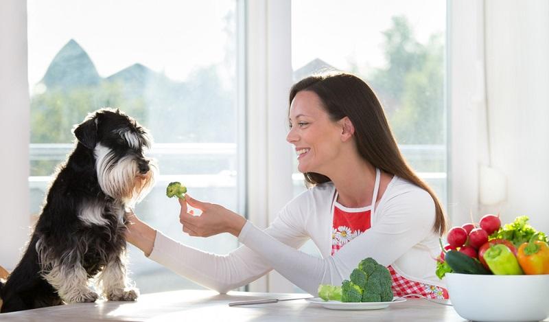 Vorsicht ! Verschluckt ein Hund einen Obstkern, können Symptome, wie Atemnot, Durchfall, Fieber, Krämpfe und Erbrechen auftreten. Es besteht die Gefahr einer akuten Vergiftung. (#02)