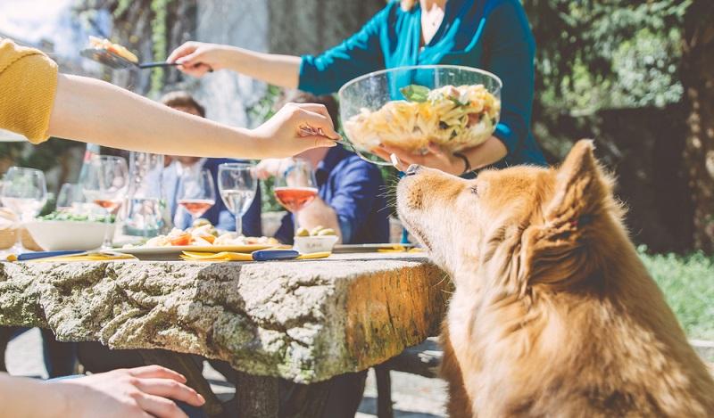 Zwiebeln und Knoblauch dürfen Hunde in keinem Fall fressen. Vorsicht giftig für Ihre Vierbeiner! (#01)