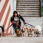 Hundepension: Darauf sollten Sie bei der Auswahl achten