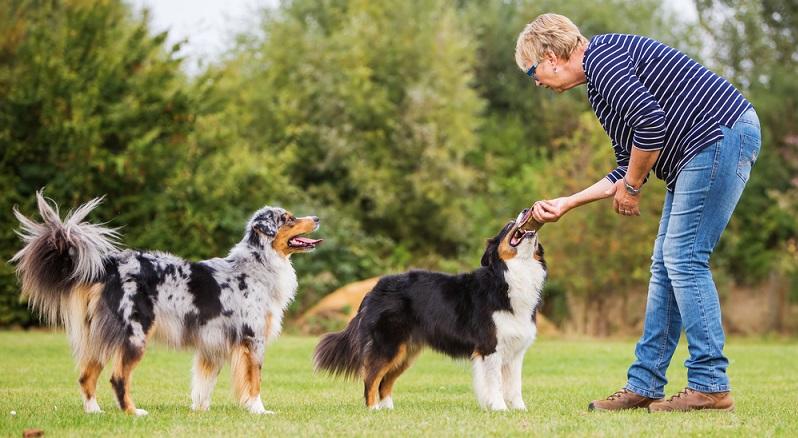 Der Besuch der Hundeschule kann angebracht sein. Hier lernt Ihr Hund den richtigen Umgang mit anderen Hunden, lernt Dominanz- und Akzeptanzverhalten kennen. (#04)
