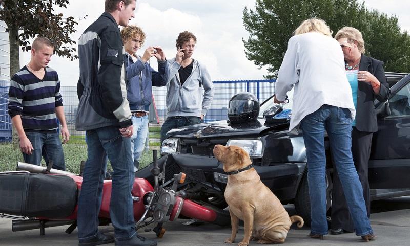 Viele Hundepensionen weisen daher darauf hin, dass eine derartige Haftpflichtversicherung vorhanden sein sollte, einige nehmen die Hunde ohne Versicherung gar nicht erst auf. (#05)