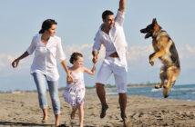 Urlaub mit Hund in Dänemark: wichtige Grundregeln für die Reisenden