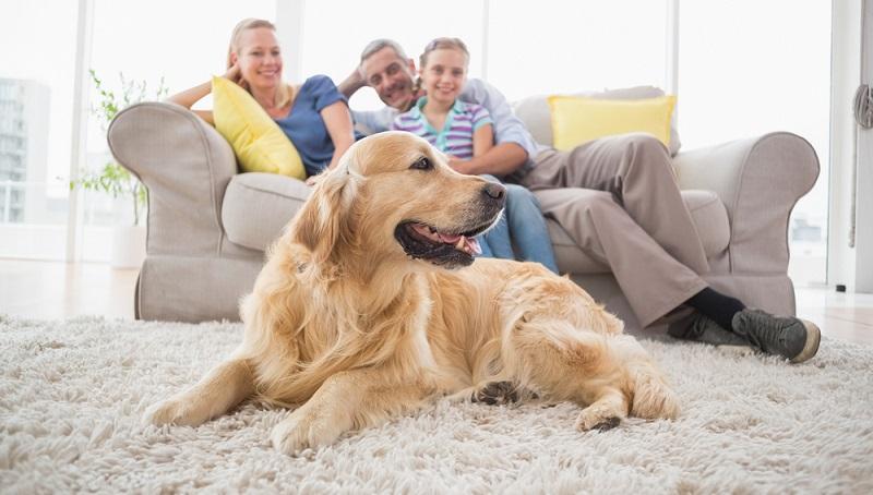Manche Vermieter sind dazu bereit, sich mit den Wohnungsbewerbern zusammenzusetzen und die Fragen zur Hundehaltung zu klären. (#02)
