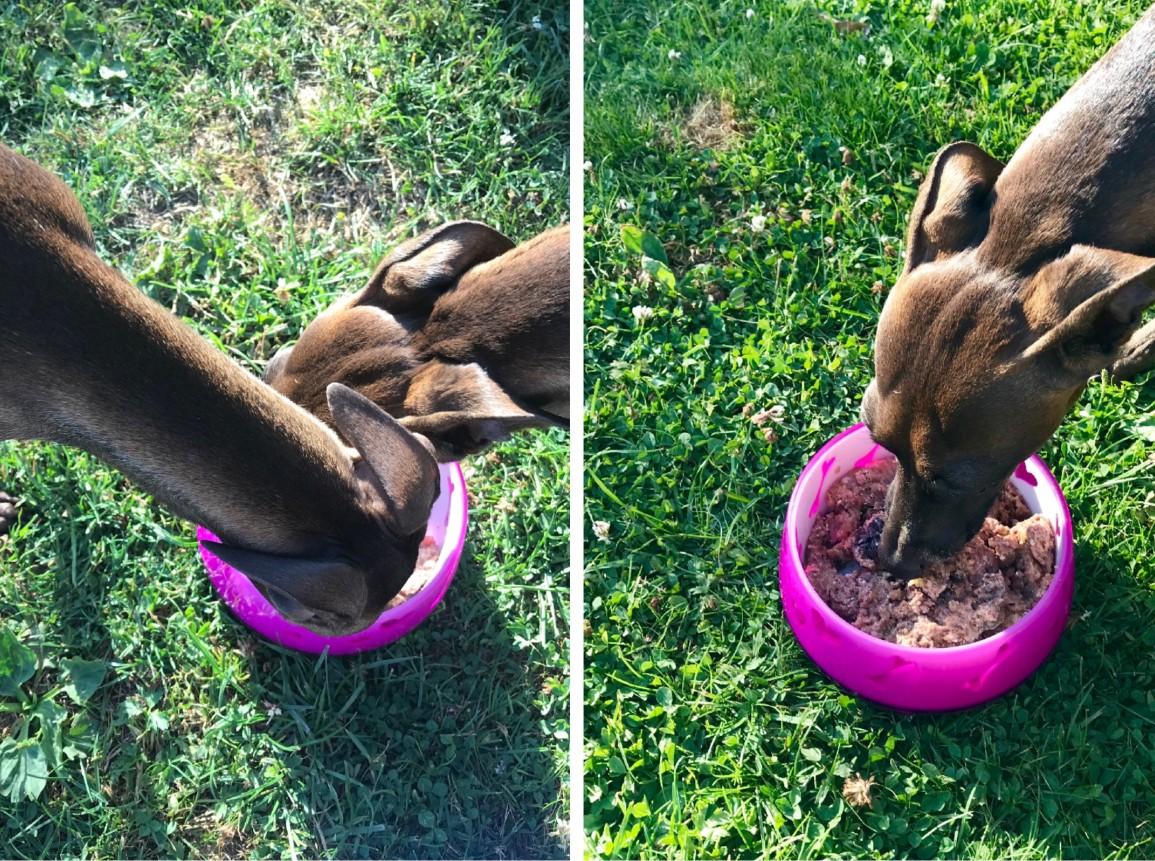 Yakari und Aponi beim Testen von Wildborn Golden Buffalo