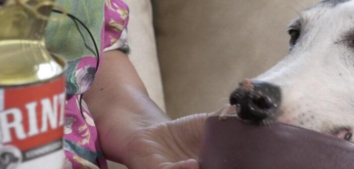 RINTI Kennerfleisch mit Kalb im großen Nassfutter-Test