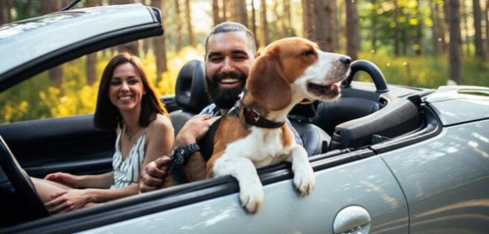 Hund & Auto: Passt das zusammen?