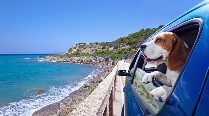 Konkret gibt es kein Gesetz, das sich ausschließlich mit dem Transport von Hunden im Auto beschäftigt. (#04)