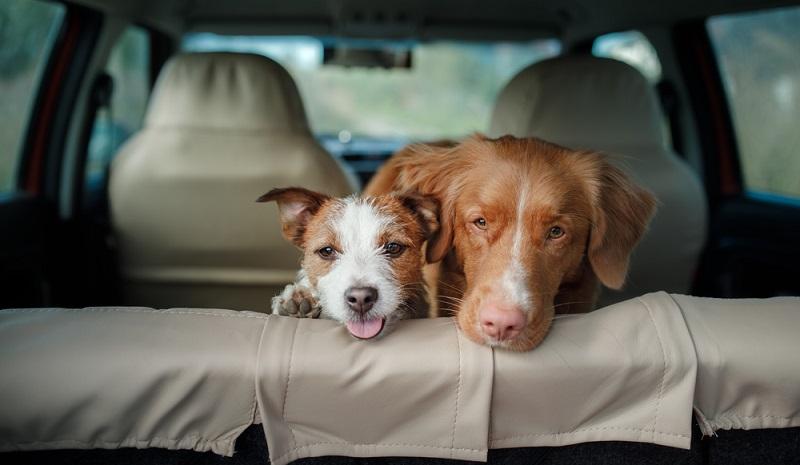 Auto und Hund können also durchaus zusammenpassen. Fährt der Vierbeiner möglichst stressfrei mit und ist er gut gesichert, spricht nichts gegen die ein oder andere Spritztour. (#02)