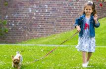 Hunde an der Leine: Erziehung und Rücksichtnahme sind gefordert