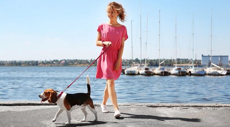 Nehmen Sie sich Zeit für die erste Übungsstunde an der Leine. Wenn der Hund nach einer langen Nacht im Haus nach draußen muss, um sein Geschäft zu verrichten, ist der falsche Zeitpunkt für intensive Erziehungsarbeit. (#01)