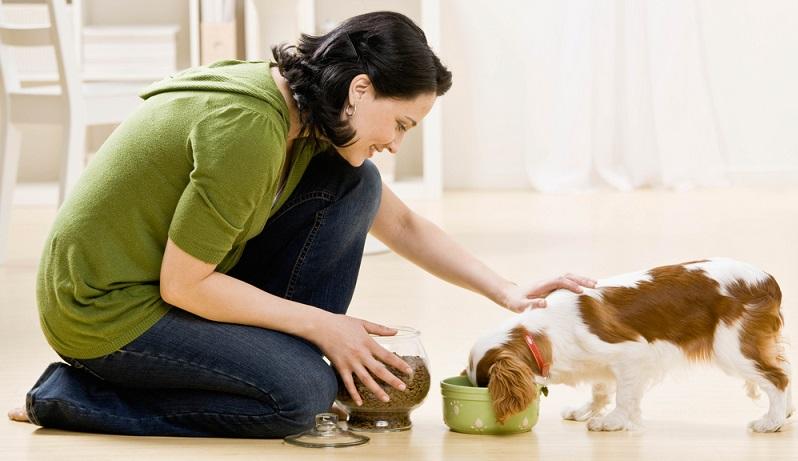 Getreide darf zwar im Hundefutter enthalten sein, aber nur in geringen Maßen! (#01)