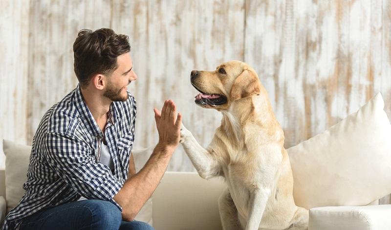 Ist der Hund wieder gesund, freuen sich Mensch und Tier. (#4)