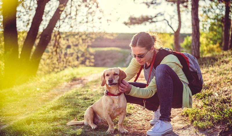 Hundebesitzer sollten nach Waldspaziergängen ihre Lieblinge nach Zecken absuchen. (#1)