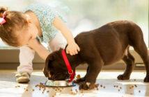 Die richtige Welpenernährung: Darauf müssen Hundebesitzer achten