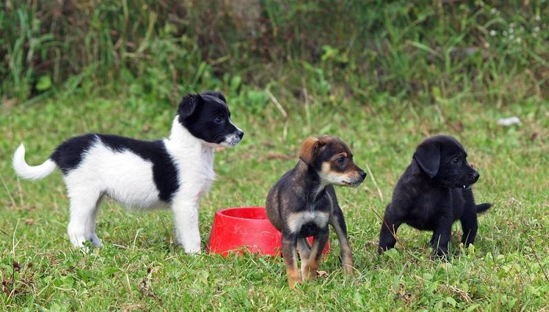 Im Welpenalter haben die Tiere ganz andere Bedürfnisse, weshalb sich auch die Ernährung dementsprechend anders gestaltet als bei ausgewachsenen Hunden. (#01)