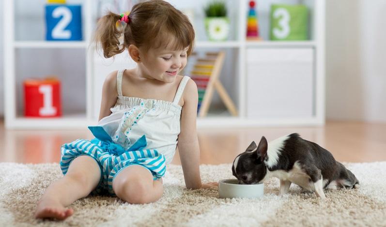 Bevor der Welpe beginnt, feste Nahrung zu sich zu nehmen, wird er in den ersten Lebenswochen von der Milch des Muttertiers ernährt. (#02)