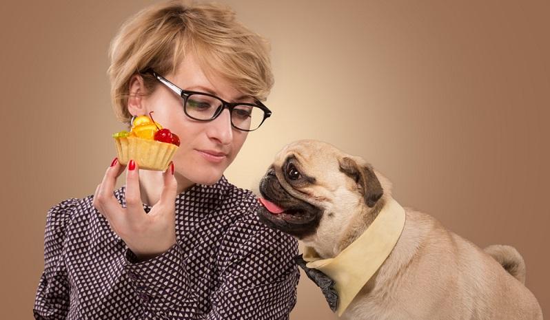 Wer glaubt, seinem Hund mit bei Menschen beliebten Leckereien eine Freude zu machen, der irrt. Es gibt diverse No-Gos, die kein Haustier fressen sollte. (#06)