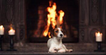 Gefahrenquelle Kamin: Ist Ihr Hund vor Verbrennungen geschützt?