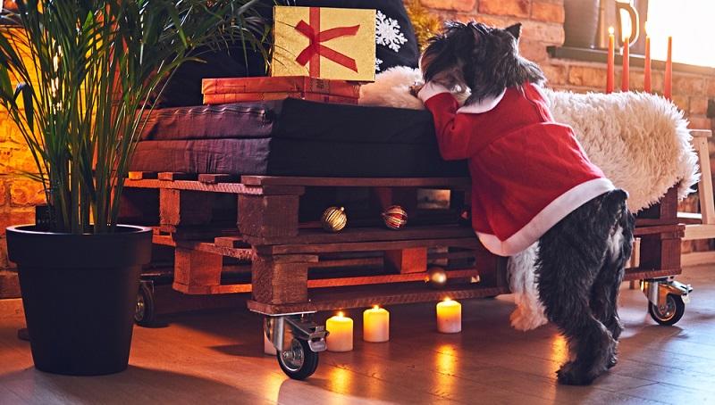 Daher sollten Sie beim Hantieren in der Küche besonders sorgfältig darauf achten, dass Ihr Hund nicht in Reichweite heißer Oberflächen oder offenen Feuers geraten kann. Das gilt übrigens auch für Kerzen, die besonders zur Weihnachtszeit zu vielen Wohnstuben gehören. (#03)