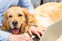 Hunde im Büro: So klappts mit dem vierbeinigen Kollegen
