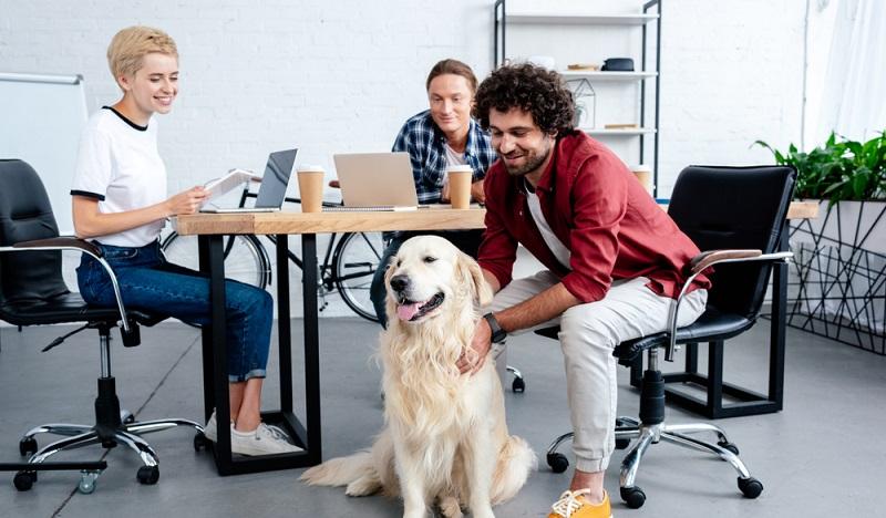 Hunde im Büro können das Klima unter Kollegen deutlich verbessern und als Folge auch die Leistung am Arbeitsplatz erhöhen. (#2)