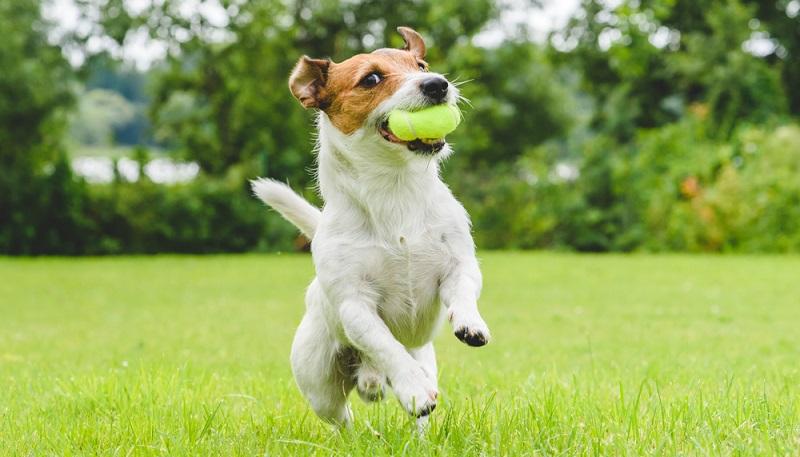 Der Hund ist wieder gesund und die Kosten der Behandlung blieben dank einer Versicherung überschaubar. (#3)