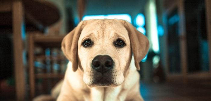 Ist eine Hundekrankenversicherung sinnvoll?