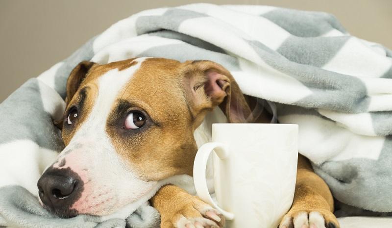 Ärgerliche Kosten sparen und dem Hund wirklich helfen. Das ist Ziel einer Hundekrankenversicherung. (#2)