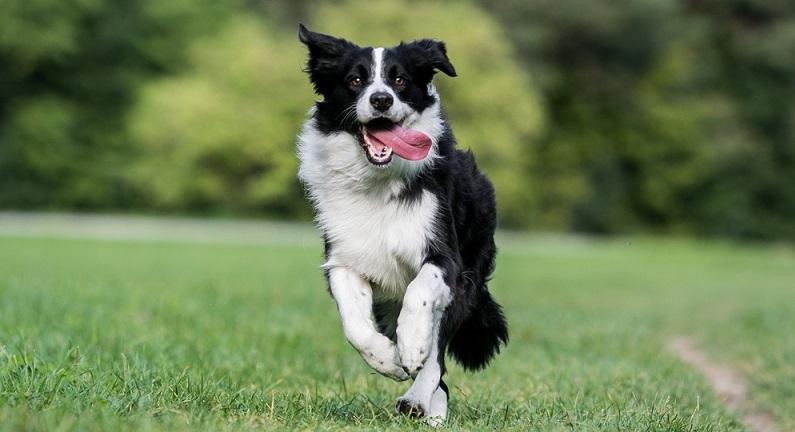 Er ist sehr robust und kann längere Zeit im Freien leben, sobald er vor Wind und Wetter auch Zuflucht und Unterkunft findet.