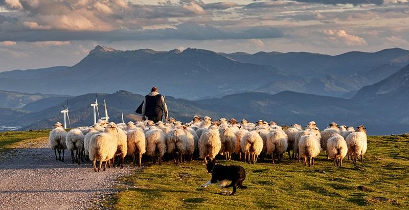 Das kommt auf die Situation an. Wer als Wanderer mitten in eine Herde gerät, kann es zu ernsten Konflikten kommen.