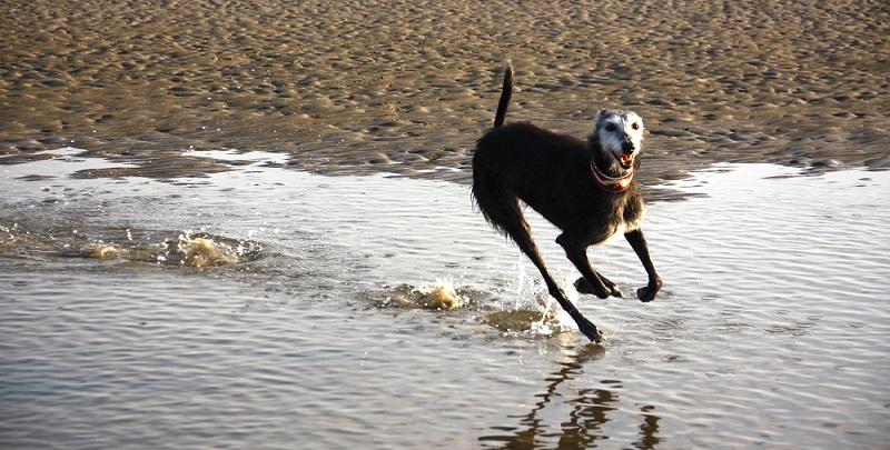 Carlotta ist auch mit ihren 10 Jahren topfit und rennt für ihr Leben gern.