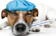 Bauchschmerzen beim Hund richtig behandeln!
