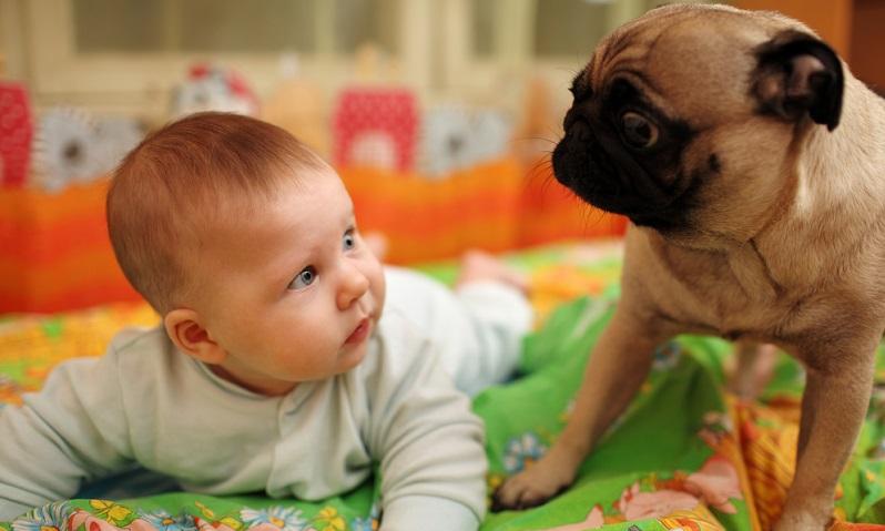 Manche Hunde können äußerst empfindlich auf veränderte Lebenssituationen reagieren und davon regelrecht Bauchschmerzen bekommen.