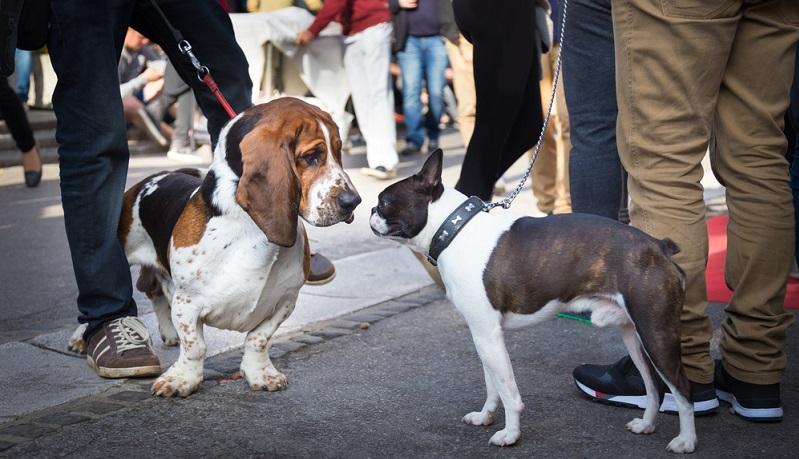 Manchmal fangen sich Hunde bei Hundebegegnungen auch einen Virus ein, der zu Bauchschmerzen führen kann.
