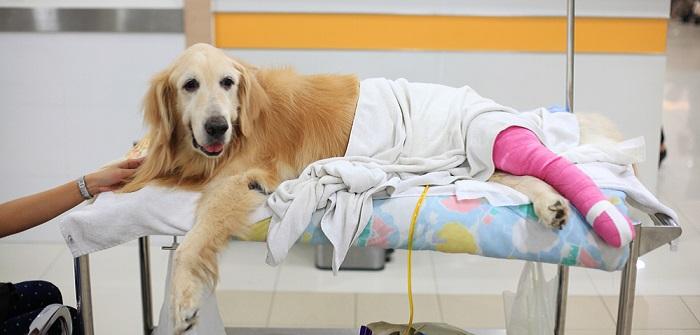 Wenn der Hund humpelt: Tipps & erste Hilfe!