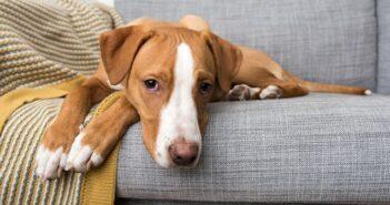 Hilfe & Tipps wenn der Hund schlapp ist
